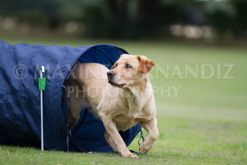 Dawns Agility 14 August 2016-2101