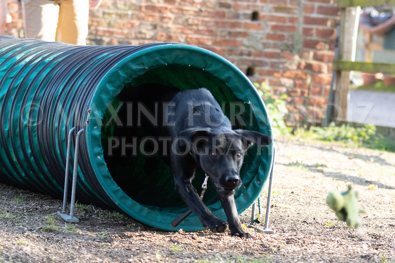 Dogs March April 2019-7334