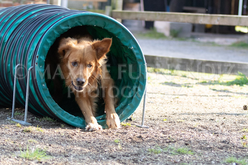 Dogs March April 2019-7342
