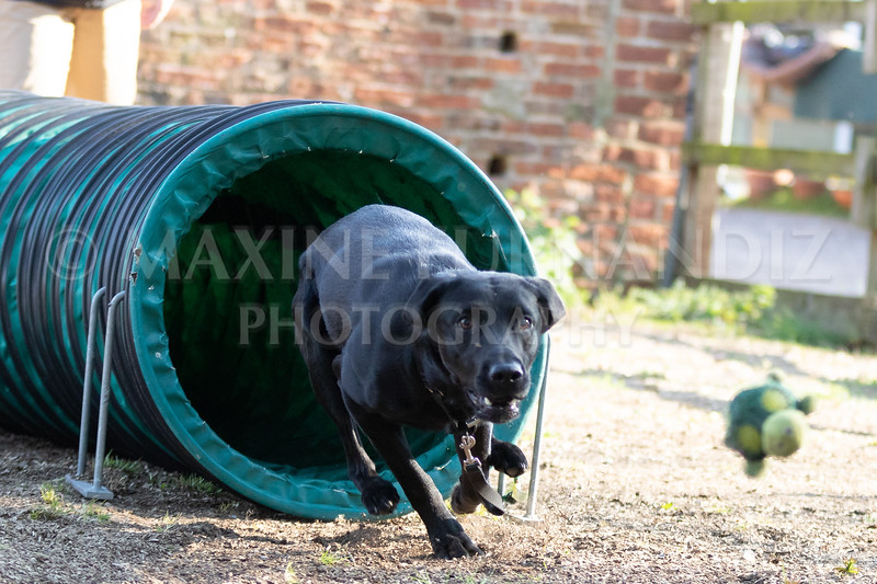 Dogs March April 2019-7335