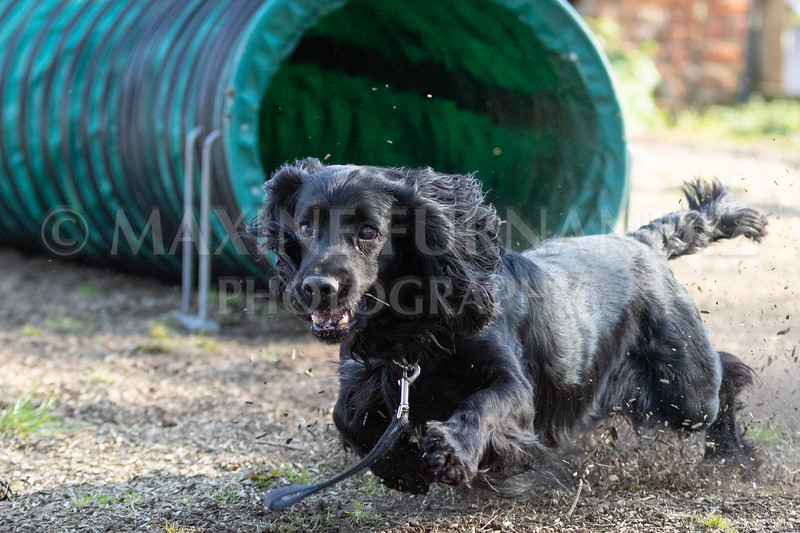 Dogs March April 2019-7328