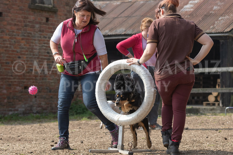 Dogs March April 2019-7187