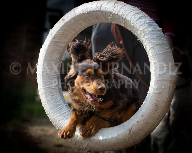 Dogs March April 2019-7156