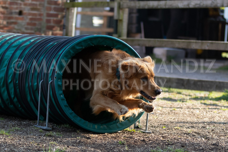 Dogs March April 2019-7345