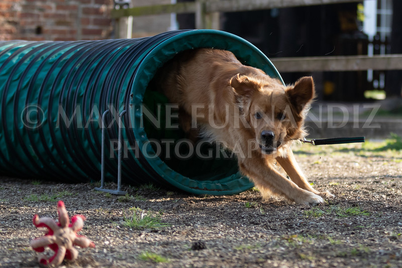 Dogs March April 2019-7348