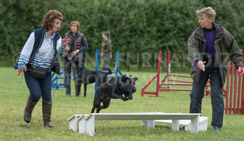 Agility & Water Day 29 June 2017-6635