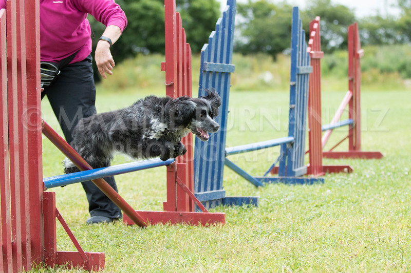 Agility & Water Day 29 June 2017-6478