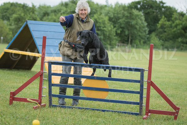 Agility & Water Day 29 June 2017-6598
