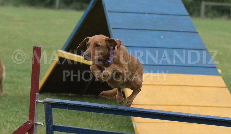 Agility & Water Day 29 June 2017-6605