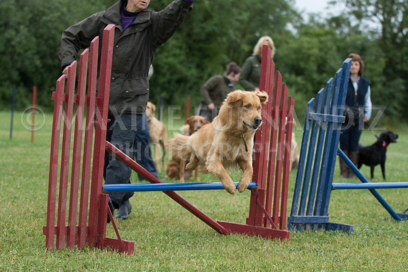 Agility & Water Day 29 June 2017-6335