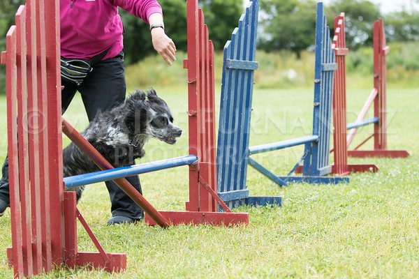 Agility & Water Day 29 June 2017-6477