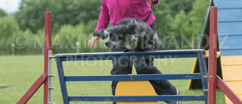 Agility & Water Day 29 June 2017-6464