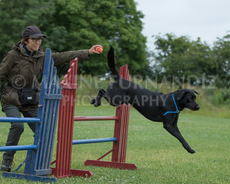 Agility & Water Day 29 June 2017-6323