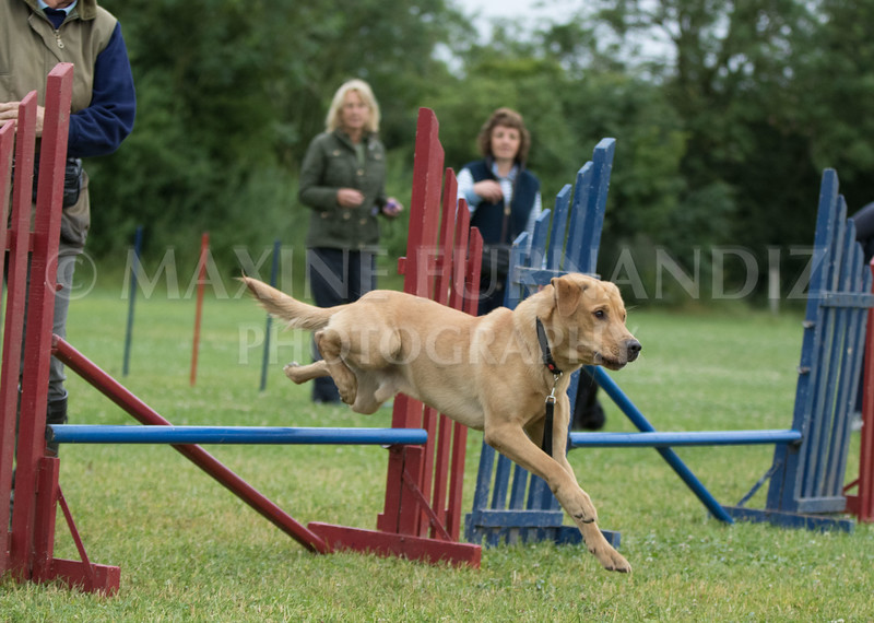 Agility & Water Day 29 June 2017-6344