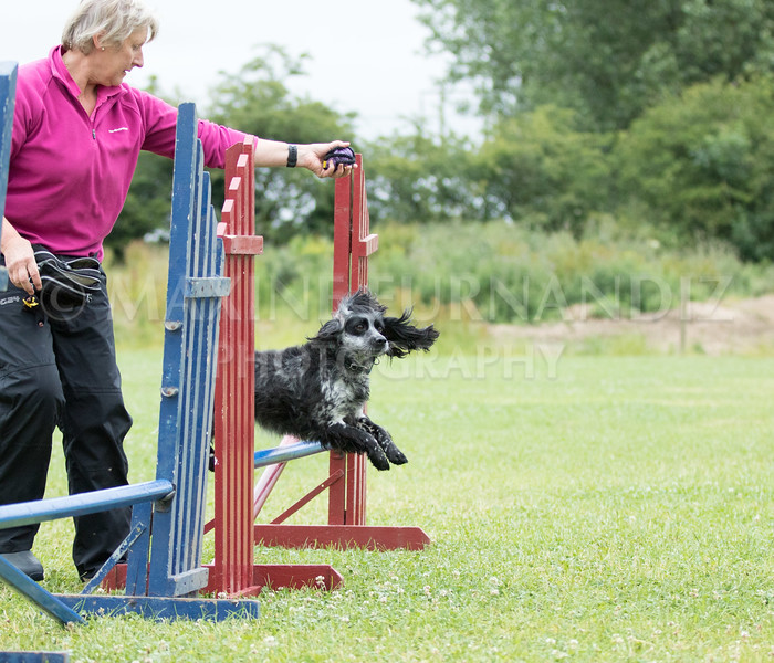 Agility & Water Day 29 June 2017-6482