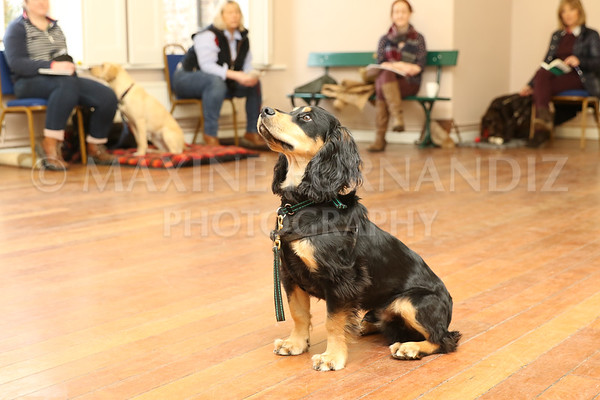 Beginners Gundog 18 Feb 2017-0058