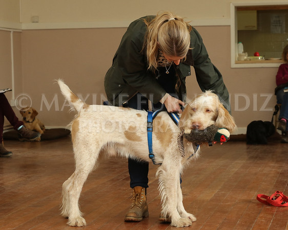 Beginners Gundog 18 Feb 2017-0172