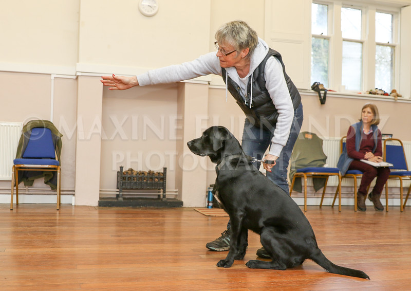 Beginners Gundog 18 Feb 2017-0100