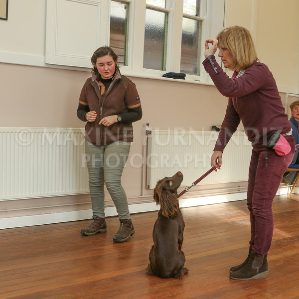 Beginners Gundog 18 Feb 2017-0178