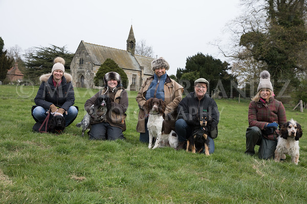 Spaniel Cocker Grp April 2017-2479