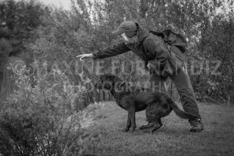 Novice Gundog May 2017-3305