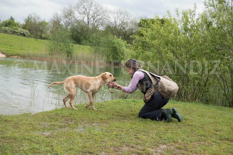 Novice Gundog May 2017-4269