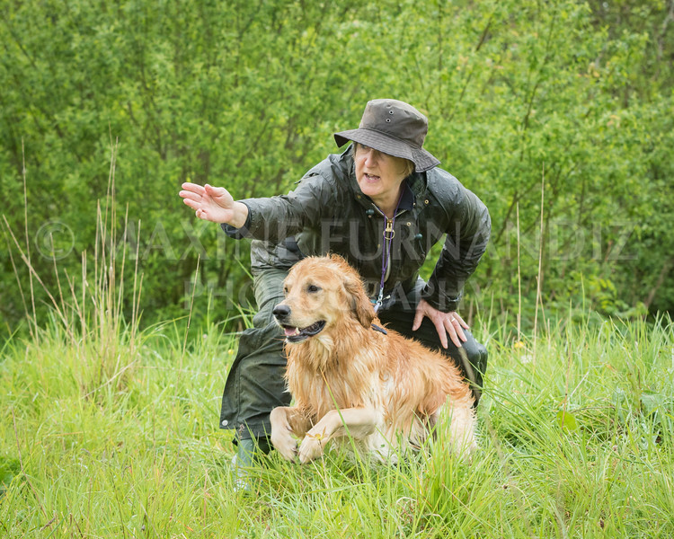 Novice Gundog May 2017-3193