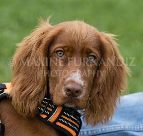 Puppy 30 Sept 2017-0228