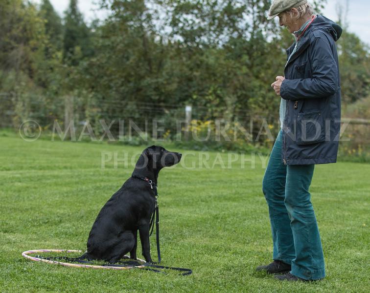 Puppy 30 Sept 2017-0249