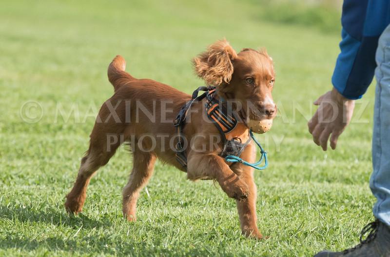 Puppy 30 Sept 2017-0123