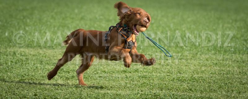Puppy 30 Sept 2017-0140