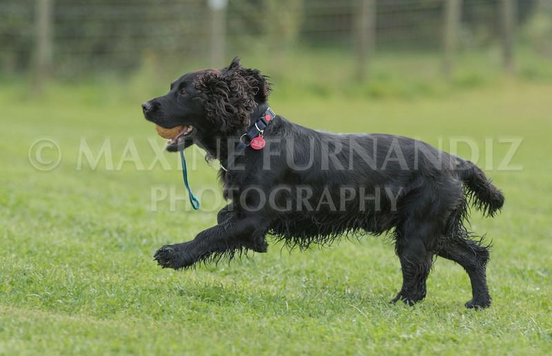 Puppy 30 Sept 2017-0203