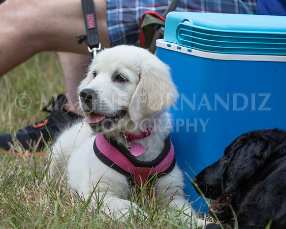 Puppy Workshop July 2018-9843