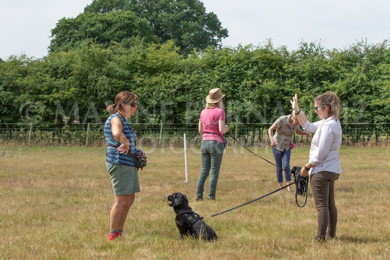 Puppy Workshop July 2018-9847