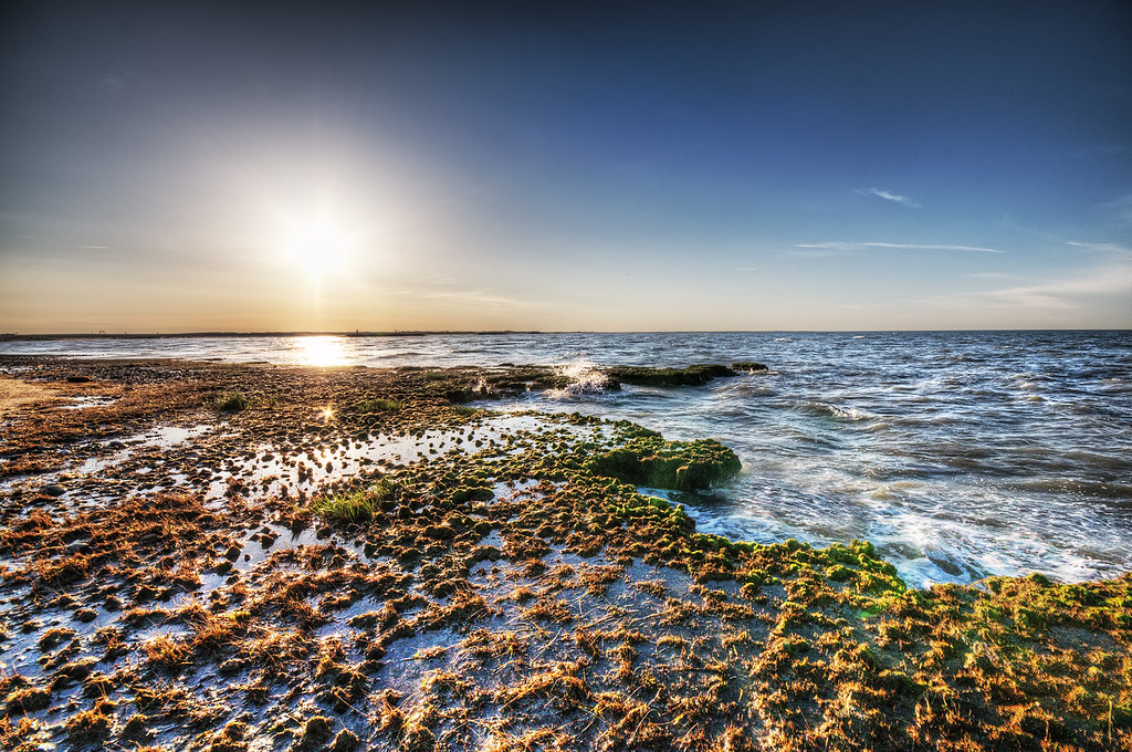 Chesapeake Bay Shoreline