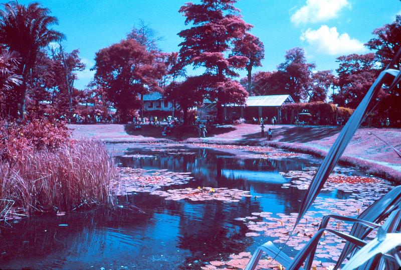 Saigon Zoo with infrared Ektachrome