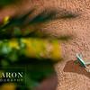 C-Baron-Agave-Real-Bridals--101