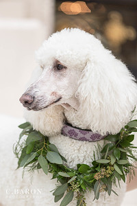 Bridal session with standard poodle at Chateau Cocomar