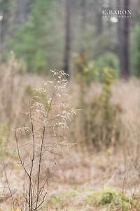 http://www.cbaronphotograpy.com