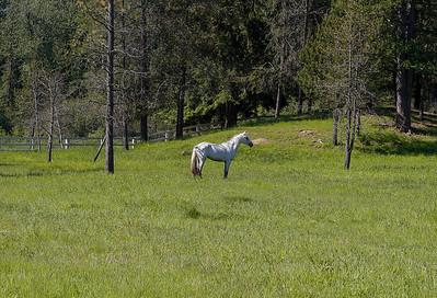 CC Sport Horses