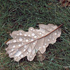 Dewdrops on leaf