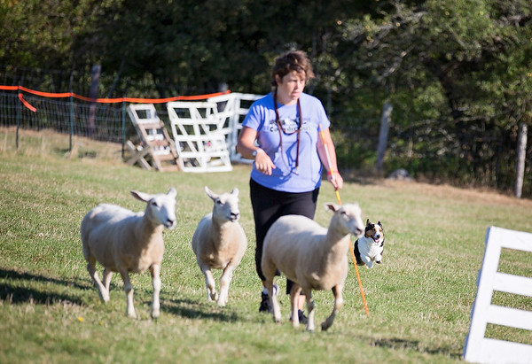 CCCC Herding Trials 2016