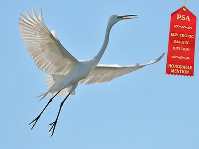 "Jerry Koons -  PSA  Honorable Mention - Jan 2009 - ""Graceful Flight"""