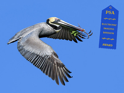 """Jerry Koons - PSA Award May 2007 - """"Pelican with Branch"""""""