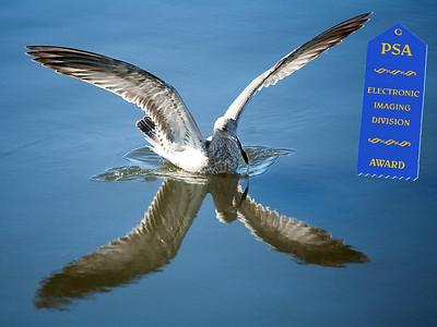 "Jerry Koons - PSA Award - Jan 2008 - ""Soft Landing"""