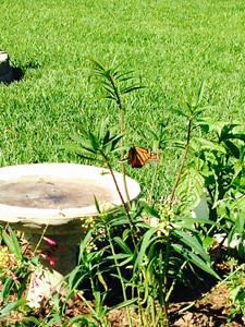 ABE's Butterfly Garden