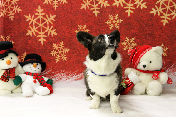 CCOC Christmas Photos