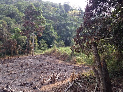 Situation of the forest near our community conservation Kpoeta community, Ghana