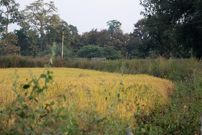 Tadoba Andhari National Park and Tiger Reserve