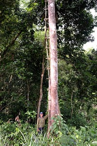 Malaysia CCRI 2017